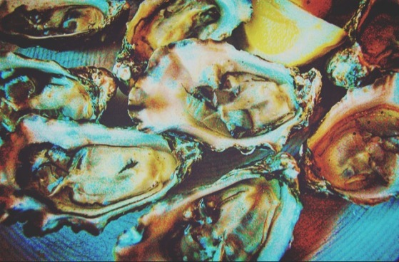 oyster 1