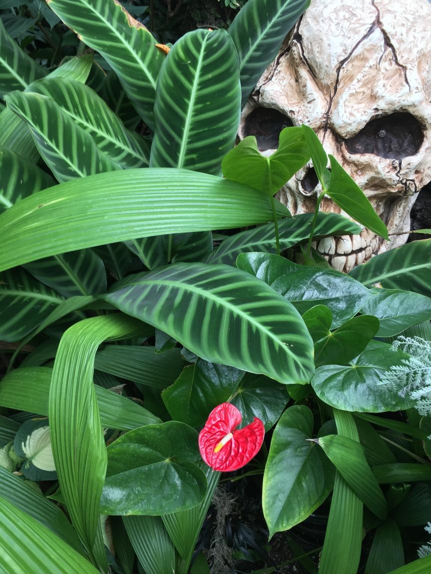 Botanical Blast…